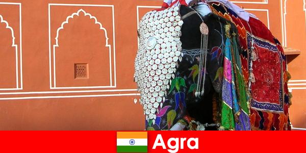 Wildnis Touristen in Agra lieben die Vielfalt der Tiere