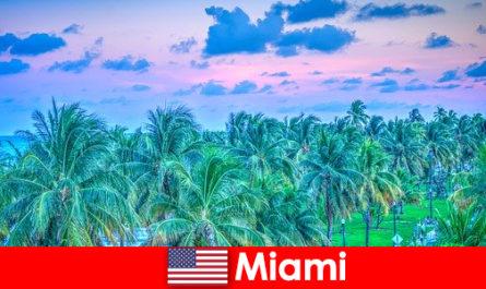 Miami atemberaubende Natur mit großem tropischen Wildnis