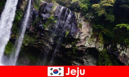 Jeju in Südkorea die subtropische Vulkaninsel mit atemberaubenden Wäldern für Ausländer