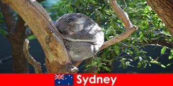Reiseziel Sydney Australien in den exotischen Zoo mit Übernachtungserlebnis