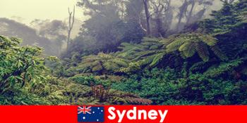 Erkundungsreise nach Sydney Australien in die beeindruckende Welt der Nationalparks